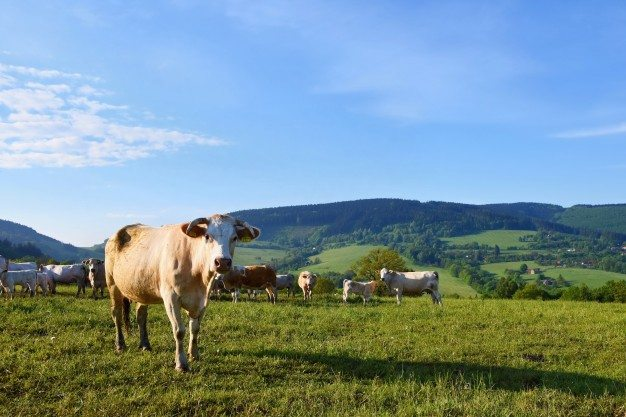 cattle-grazing-in-the-meadow_1161-76