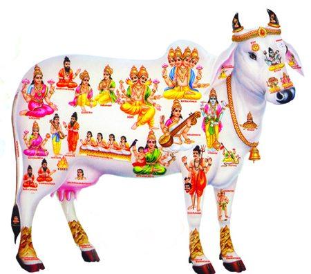 kamadhenu-cow